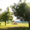 Serenity Field