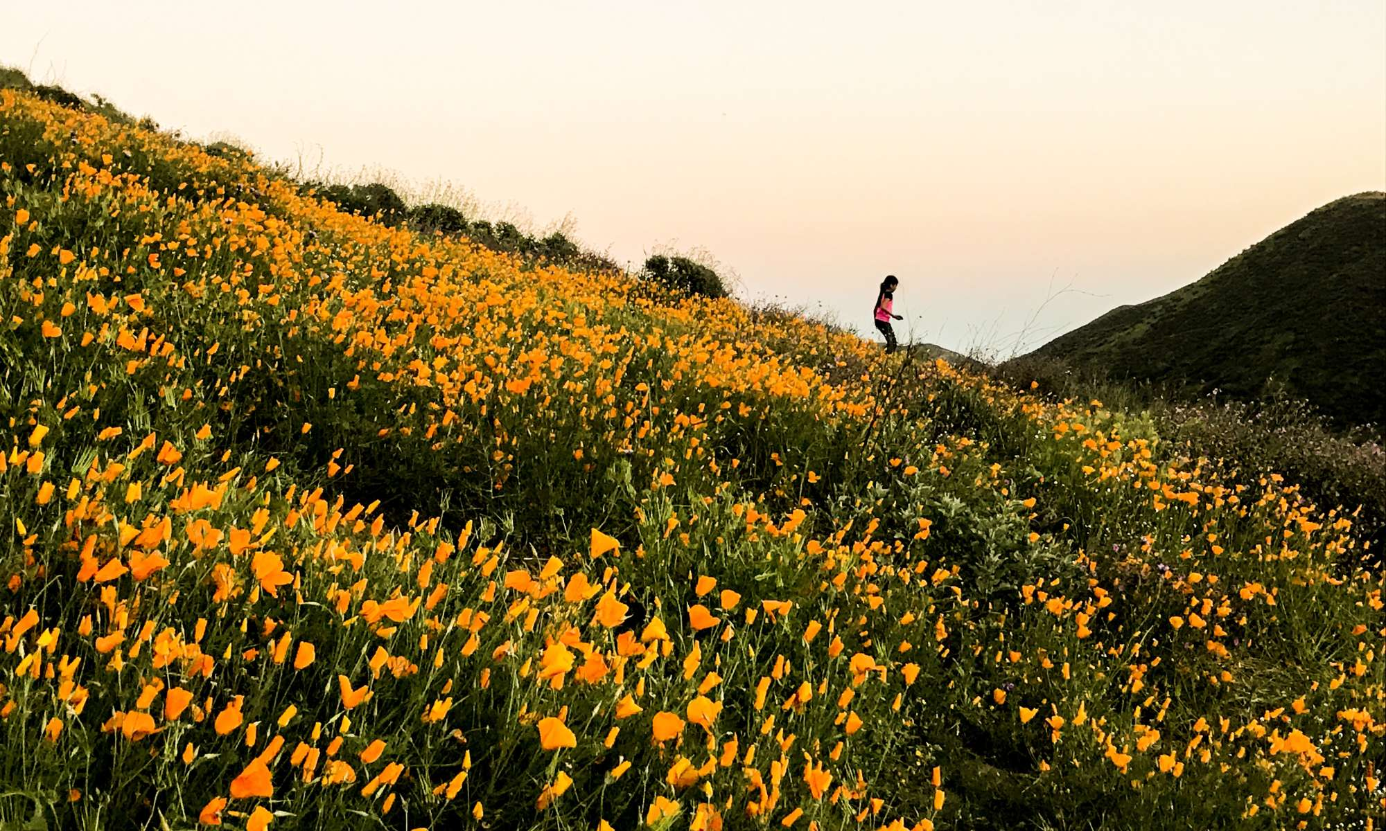 The Best Photos from the 2017 Superbloom