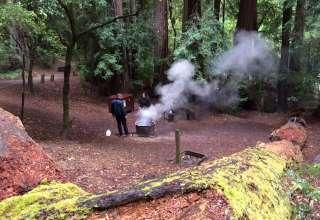 Portola Redwoods