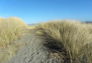 Tolowa Dunes