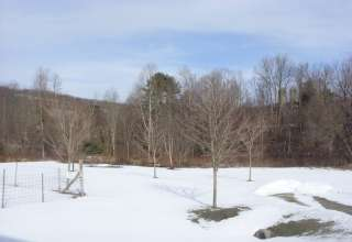 Salt Springs Park