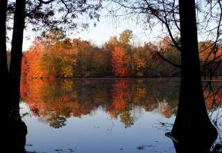 Trap Pond