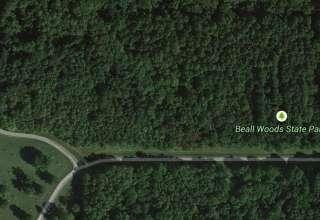 Beall Woods