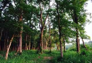 Walnut Woods