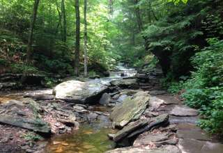 Ricketts Glen Park
