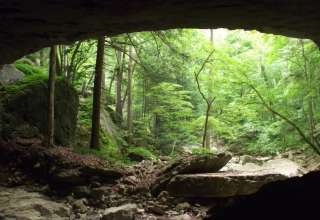Carter Caves