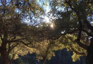 Harrison Serenity Ranch