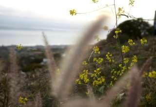 Malibu Serene Views