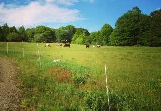 Toddy Pond Farm