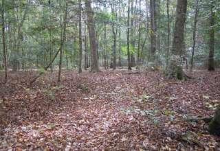 Allen Acres Natural Area