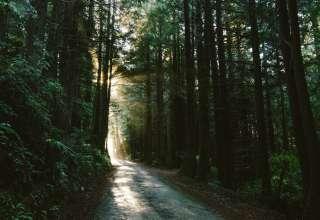 Prairie Creek Redwoods