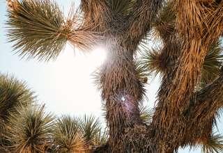 Near Joshua Tree