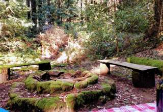 Mossy Bench