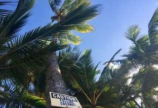 Camp Maui X