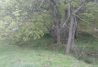 Doubletree Farm