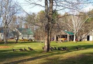 Maple Moon Farm Maine