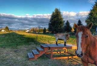 Little Pilchuck Farm