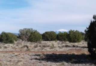 Archie M.'s Land