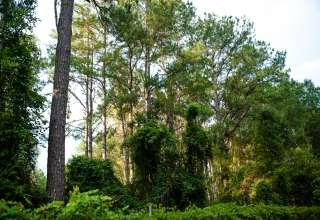 Serene Forested Blueberry Farm