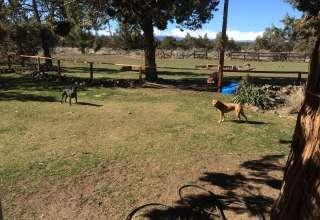 Pittbull Ranch