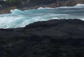 Hamakua Coast Hideaway