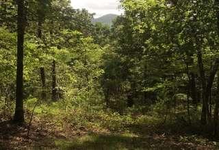 Mountain View Serenity