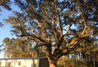 Carrie Oak Retreat