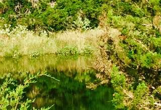 Helene G.'s Land