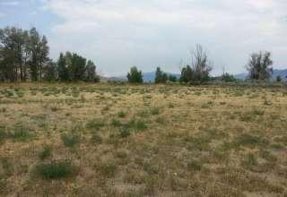 Open Pasture land