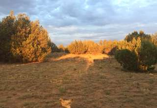 Antelope Run Revegetation