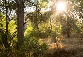 Sierra Foothill Oasis