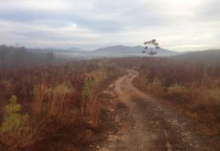 Redbud Tree Farm