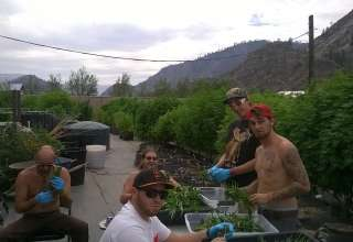 Oberfelder Cannabis Farm Camp