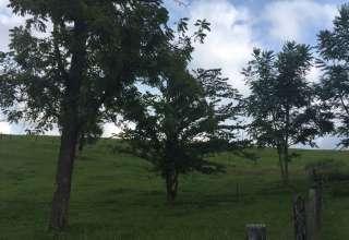 Country Backyard Oasis