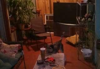Razzy's Canine Cabaña