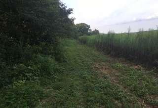 Wild & Organic Land