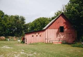Black Dogs Farm