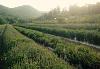 Biodynamic Medicinal Herb Farm