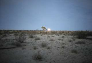 Mojave Forest