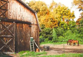 Majestic Mustang Stables & Camp