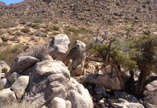 Finding Ground in Joshua Tree