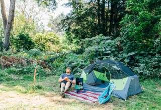 Fuschia Berry Fog Camp