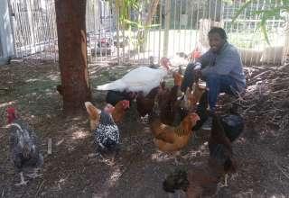 Laid Back Las Vegas Farm