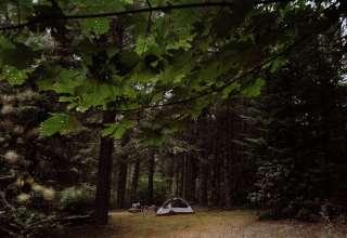 Cedar Root at Highland Butte