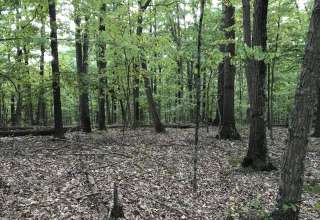 Trusty Woods