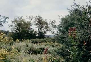 Dan R.'s Land
