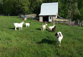 Hillwood Farm