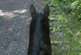 Caballine Equestrian Getaway