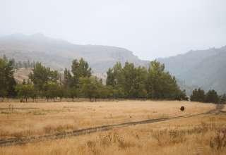 Rene R.'s Land