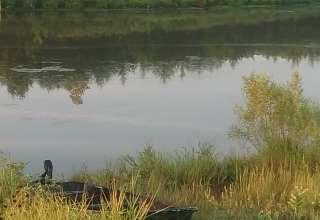 Echo Lake Bison Ranch